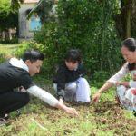 Dùng cây dã quỳ làm phân bón vi sinh