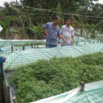 Mô hình nuôi lươn thu tiền tỷ mỗi năm - mo hinh nuoi luon doc dao thu tien ty moi nam 1 1 150x150