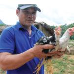 Mô hình nuôi gà re – giống gà mới