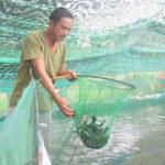 Mô hình nuôi cá lóc trên cát - lot bat tren cat nuoi ca loc 150x150