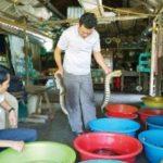 Nuôi rắn ri tượng trong thau nhựa ở Cà Mau - nuoi ran ri tuong trong thau nhua o ca mau 150x150