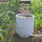 Vai trò của vi khuẩn trong phân trùn quế