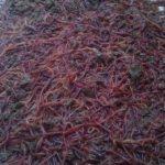 Hướng dẫn thu hoạch và bảo quản trùn - ky thuat thu hoach trun que 150x150
