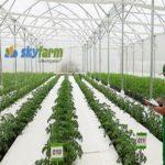 """""""Kẻ ngoại đạo"""" làm giàu từ trồng… cà chua công nghệ cao"""