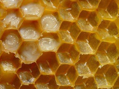 Điều trị thối ấu trùng ong mật - au trung ong