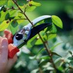 Một số kinh nghiệm đơn giản trong chăm sóc cây cảnh