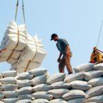 Tìm hướng đi mới cho gạo xuất khẩu