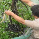 Giới thiệu mô hình nuôi rắn ri cá thành công