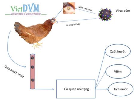 Nhận diện các loại cúm ở gia cầm và gia súc - nhan dien cac loai cum o gia cam va gia suc 17173 10