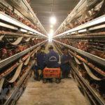 Nông nghiệp thông minh: Tạo chuỗi giá trị sản xuất khép kín