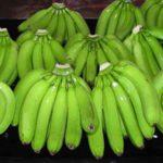 Giới thiệu về cây chuối Laba