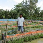 Lót bạt nuôi lươn trên ruộng, bỏ 1 đồng vốn thu 4 đồng lời
