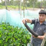 Nuôi rắn ri voi (rắn ri tượng) thu lãi 300 triệu đồng/năm
