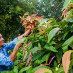 Trồng rau rừng kiếm gần 20 triệu đồng mỗi tháng ở Tây Ninh
