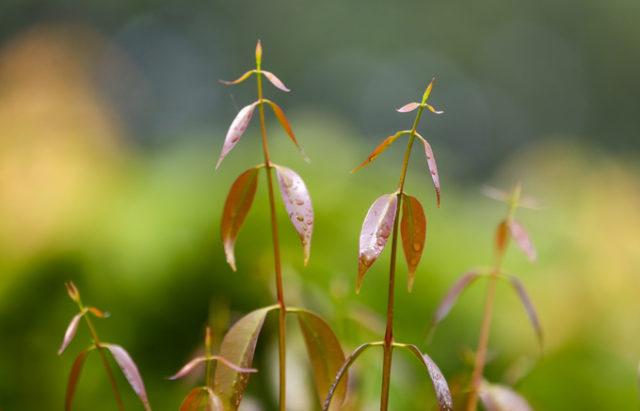 Trồng rau rừng kiếm gần 20 triệu đồng mỗi tháng ở Tây Ninh - trong rau rung kiem gan 20 trieu dong moi thang o tay ninh 4 640x411
