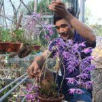 Vườn lan rừng tiền tỷ của cử nhân bỏ phố về làm nông dân - vuon lan rung tien ty cua cu nhan bo pho ve lam nong dan 150x150