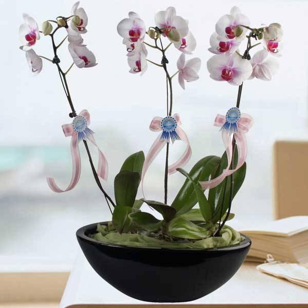 Bật mí danh sách các loại hoa dễ trồng trong chậu - bat mi danh sach cac loai hoa de trong trong chau