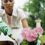 Bỏ túi bí quyết chăm sóc các loại hoa cảnh vào mùa đông xuân