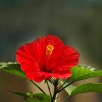 Khám phá những loài hoa chịu nắng tốt, thích hợp để trồng trên ban công?
