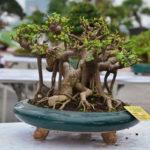 Kĩ thuật chăm sóc 4 loại cây cảnh đẹp dễ trồng tại nhà