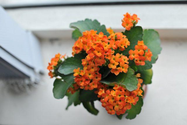 Trang trí không gian ban công với các loại hoa ưa bóng râm - trang tri khong gian noi that voi cac loai hoa ua bong ram 5 640x427