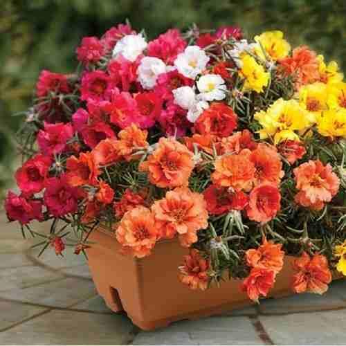 Các loại hoa rủ đẹp giúp ban công nhà nổi bật nhất phố - bo tui 4 ly do trang tri ban cong bang cac loai hoa ru 5
