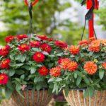 Các loại hoa trang trí ban công tuyệt đẹp được ưa chuộng nhất