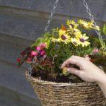 Các loại hoa trồng ban công có dễ chăm sóc không?