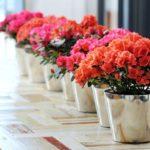 Các loại hoa chịu bóng râm, sinh trưởng tốt trên ban công khuất nắng