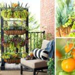 Cách trồng rau trên ban công nhỏ hẹp