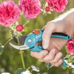 Kỹ thuật cắt tỉa cành cơ bản cho các loại hoa trồng ban công
