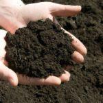 Mẹo phòng trừ sâu bệnh cho cây cảnh trồng ban công