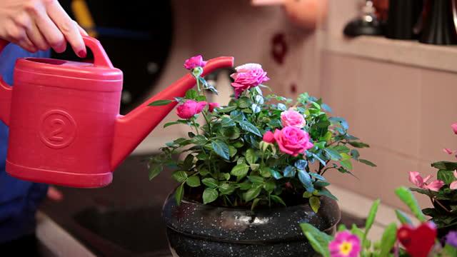Tuyệt chiêu chống rét cho các loại cây hoa cảnh - tuyet chieu chong ret cho cac loai cay hoa canh 1