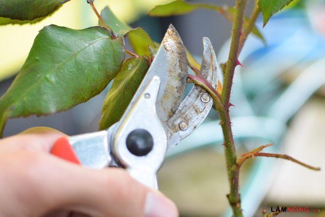 Tuyệt chiêu lựa chọn các loại hoa leo giàn dễ trồng cho ban công - tuyet chieu lua chon cac loai hoa leo gian cho ban cong 3 640x427
