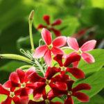 Học lỏm cách chăm sóc hoa giun từ chuyên gia làm vườn