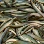 Kỹ thuật nuôi cá chạch bùn (cá chạch đồng) - ky thuat nuoi ca chach bun cac chach dong 150x150